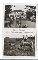Sarrebourg , Café Pierre , Jardin Zoologique , Hoff - Sarrebourg