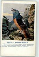 53147988 - Felddrossel - Oiseaux