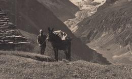 OLD POSTCARD - SWITZERLAND - SCHWEIZ - SUISSE -  MAULTIER - DONKEY - ZINAL - ALPE DE LIREC - VS Valais