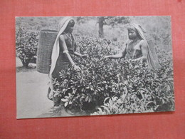 Tea Pluckers Sri Lanka (Ceylon)    Ref 3837 - Sri Lanka (Ceylon)