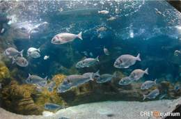 Animaux - Poissons - Grèce - Crete - Gournes - Thalassocosmos - Cretaquarium - Vue D'un Aquarium - Carte Neuve - Voir Sc - Pescados Y Crustáceos