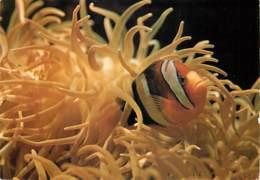 Animaux - Poissons - Belgique - Institut De Zoologie De L'Université De Liège - Association Symbiotique Entre Le Poisson - Pescados Y Crustáceos