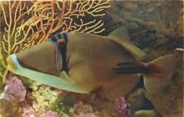 Animaux - Poissons - Carte Du Comité National De L'Enfance - Baliste à Bandes Bleues - Carte Neuve - Voir Scans Recto-Ve - Pescados Y Crustáceos