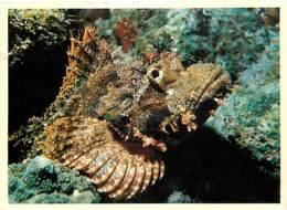 Animaux - Poissons - Faune Sous-marine - Poisson Pierre - Voir Scans Recto-Verso - Pescados Y Crustáceos