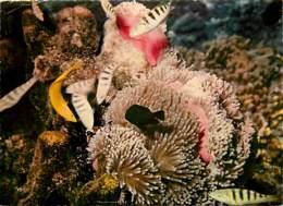 Animaux - Poissons - Tahiti - Jardin De Corail - Carte Neuve - Voir Scans Recto-Verso - Pescados Y Crustáceos