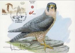 MC1629 - Faucon Pélerin / Slechtvalk (Falco Peregrinus) - 1985-.. Oiseaux (Buzin)