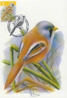 MC1652 - Panura à Moustaches / Baardmannetje (Panurus Biarmicus) - 1985-.. Oiseaux (Buzin)