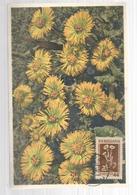 Bulgaria Maximum Card Flowers - Bulgaria