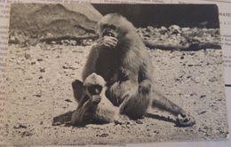 Comité National De L'Enfance – Gibbon Et Son Petit (Parc Zoologique Du Bois De Vincennes) - Scimmie