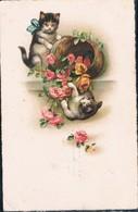 2 Chats - Cats -katzen - Poesjes - - Cats