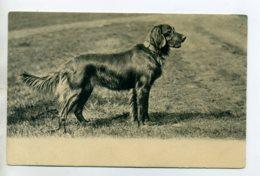 CHIENS 395  Beau Chien De Chasse 1904 - Chiens