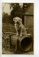 "CHIENS 441 "" Home Sweet Home"" Chien  Sur Sa Niche Tonneau Tirage Carte Photo 1920 - Chiens"