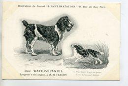 CHIENS 313 Bis  Chien Chasse  Water Spaniel Epagneul D'eau Anglais   1904 Journal L'Acclimatation - Chiens