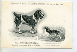 CHIENS 313 Bis  Chien Chasse  Water Spaniel Epagneul D'eau Anglais   1904 Journal L'Acclimatation - Dogs