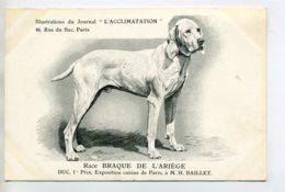 CHIENS 324  Bis  Chien Chasse Braque De  L'Ariege   1904 Journal L'Acclimatation - Dogs