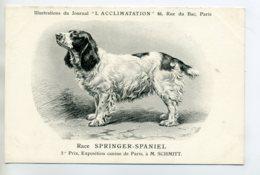 CHIENS 331  Bis  Chien Chasse Springer Spaniel   1904 Journal L'Acclimatation - Chiens