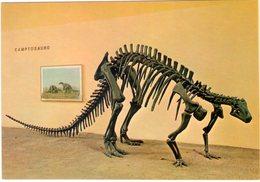 Camptosauro. Museo Civico Storia Naturale Milano. NV. - Animaux & Faune