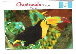 Guatemala - Tucan - Toucan - Bird - Vogel - Picoiris - Uccelli