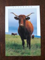 L21/1372 Auvergne - Vache De Race . Salers - Auvergne