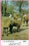 Ticket / Postcard - ZOO Garden - Camel, Osijek, Yugoslavia - Tickets - Entradas