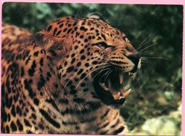 Ticket / Postcard - ZOO Garden - Leopard, Osijek, Yugoslavia - Tickets - Entradas