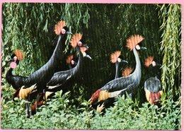 Ticket / Postcard - ZOO Garden - Crown Cranes, Osijek, Yugoslavia - Tickets - Entradas