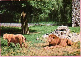 Ticket / Postcard - ZOO Garden -  Lion, Osijek, Yugoslavia - Tickets - Entradas