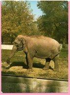 Ticket / Postcard - ZOO Garden -  Elephant, Osijek, Yugoslavia - Tickets - Entradas