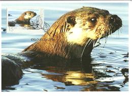 Norway 2010 Animals, Fishing Otter, Fischotter (Lutra Lutra) Mi 1707  Maximums Card - Norwegen