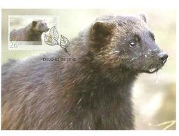 Norway 2010 Animals, The Wolverine, Gulo Gulo Mi 1709  Maximums Card - Norwegen