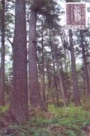 CINA  FOREST IN NORTH EAST CHINA MAXIMUM POST CARD  1995    (GENN200685) - 1949 - ... República Popular