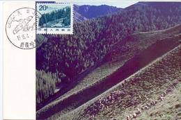 CINA TIANSHAN FOREST IN NORTH WEST CHINA MAXIMUM POST CARD  1995    (GENN200686) - 1949 - ... République Populaire