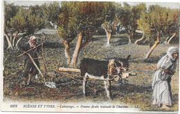 SCENES ET TYPES D'AFRIQUE DU NORD - CPA COLORISEE - LABOURAGE - Femme Arabe Trainant La Charrue - CAT - - Scenes