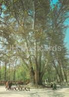 Ashgabat - Ashkhabad - Plane Tree In Firyuza Settlement - 1984 - Turkmenistan - Unused - Turkménistan