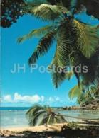 Beach View Mache - 105 - 1983 - Seychelles - Used - Seychelles