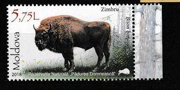 Moldavie. Moldova.. Bison D'Europe. - Vacas