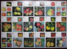APPLES. VARIETIES OF APPLE TREES. Set Of 18 Postcards In Folder - USSR, 1989 - Botanik