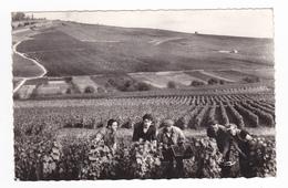 Vendanges En Champagne Vigne Vin Raisin Vendangeurs Vendangeuse N°R1 VOIR DOS Postée De Vertus En 1958 - Vertus