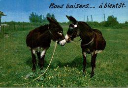 ANES  BONS BAISERS ... A BIENTOT - Burros