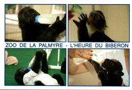 ZOO DE LA PALMYRE  L'HEURE DU BIBERON  MULTI-VUES - Scimmie