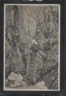 AK 0409  Hohe Wand - Naturfreundesteig / Aufnahme Ig. Drgatsch Um 1929 - Neunkirchen