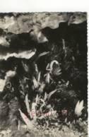 CPM.les Eysies .grotte Du Grand Roc .laugerie Basse.ed:EREL Num:10 - Zonder Classificatie