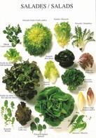 Les Salades (2 Scans) - Botanik