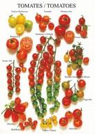 Les Tomates (2 Scans) - Botanik