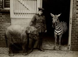 LONDON BABY JUMBO AT THE ZOO BABY ELEPHANT WITH ZEBRA 21 *16CM Fonds Victor FORBIN 1864-1947 - Fotos