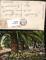 645785,California Park Palme Stp. Los Angeles To Franconville Seine Et Oise - Ohne Zuordnung