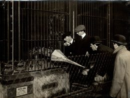 TRYING TO GET  GRAMOPHONE RECORD SPOTTED HYAENA AT THE ZOO  21 *16CM Fonds Victor FORBIN 1864-1947 - Fotos