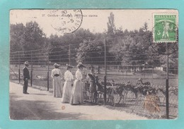 Small Old Post Card Of Parc Aux Daims,Geneve,Geneva, Switzerland,S91. - GE Geneva