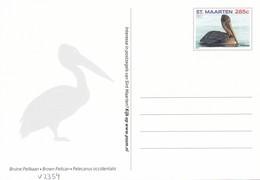 Postcard Dutch St. Maarten With Birds, Pelican, Unused - Oiseaux