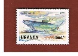 UGANDA   - SG 466   -  1985 LAKE FISHES: RADCLIFFE BARB      - USED ° - Uganda (1962-...)